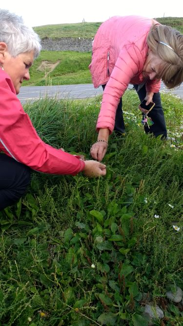 learning how to identify wild edibles