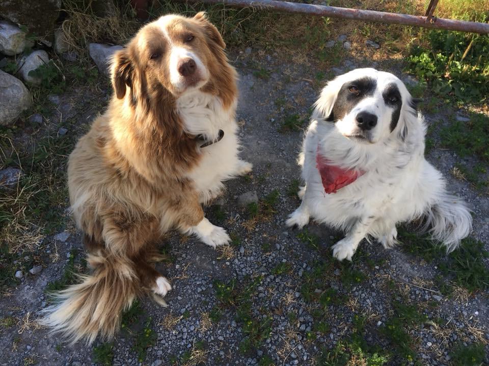Farm dogs to greet you - the two pets are heart warmers that give every visitor a fond memory to bring back. Photogenic and pure charmers!