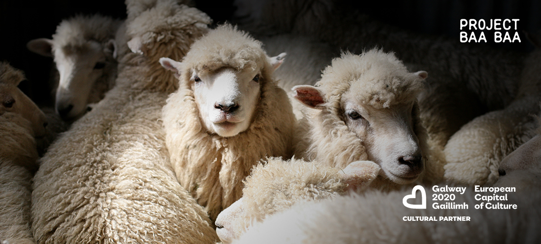 PROJECT BAA BAA is a Galway 2020 European Capital of Culture project
